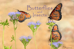 Butterflies and Insects Lisa Wood