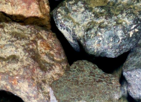 Dinosaur Bone Fossil