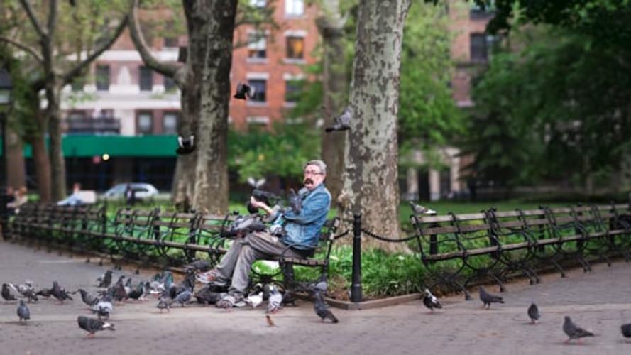 New-York's Man's Pigeons