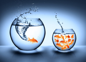 Big Fish - Little Pond Effect? Which Pond Will You Swim In?