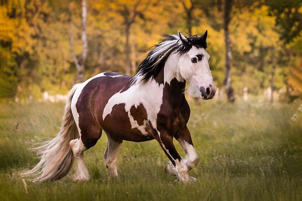 HorseshootJackB7.jpg