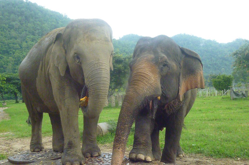 Elephant Nature Reserve