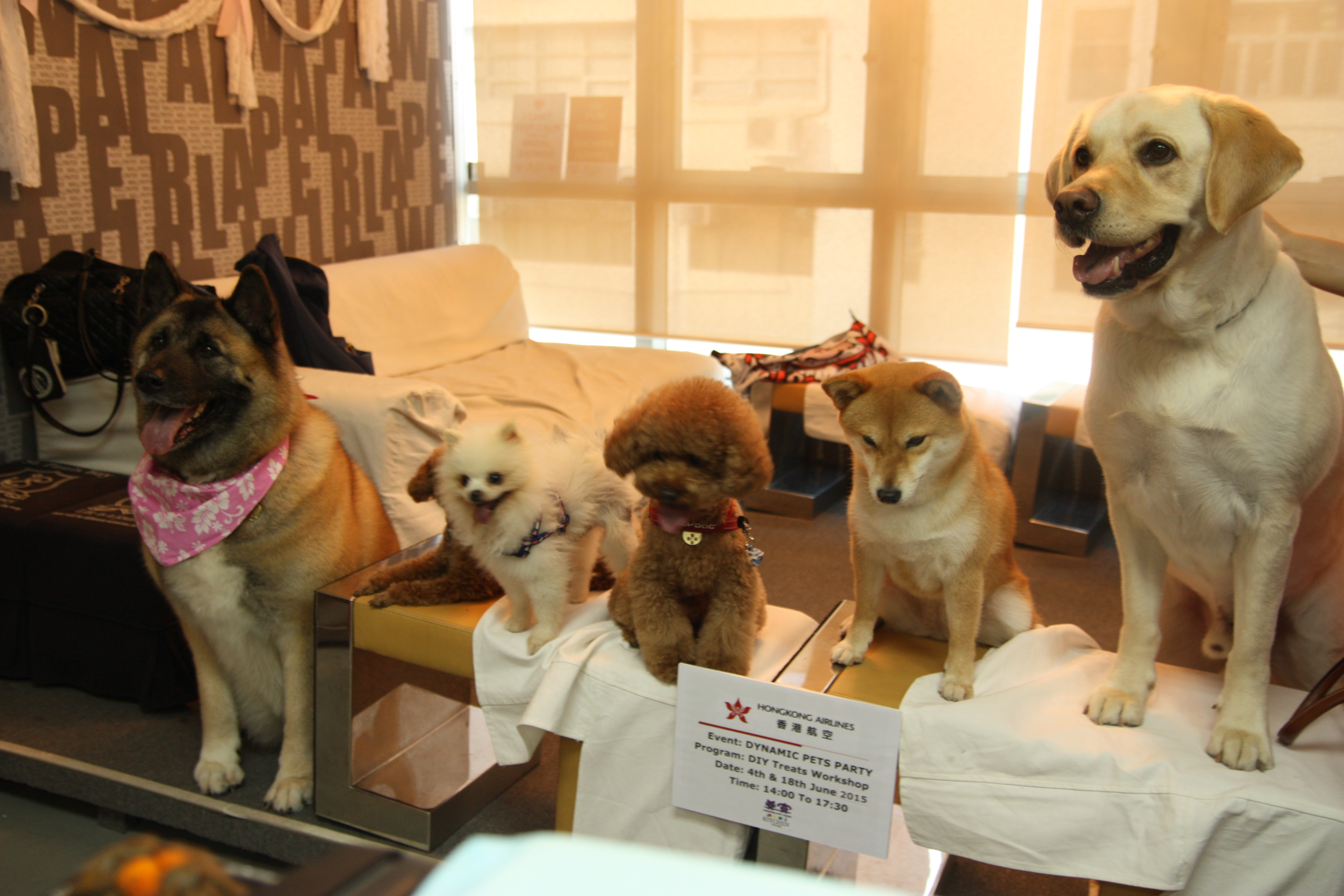 Pets Events
