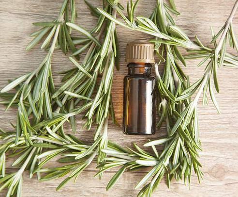 Essential Oil Spotlight: Rosemary