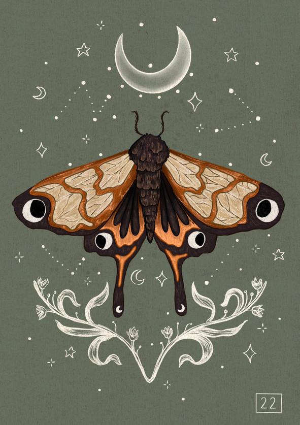 Mystic Moth Illustration using Procreate
