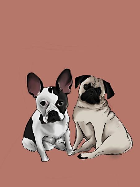 Full Body Pet Portrait Timelapse .mp4