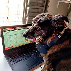 foto cachorro no computador usando fone de ouvido