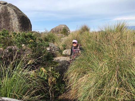 mato alto trilha pico dos marins