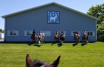 Best Quarter Horse Cross.jpg
