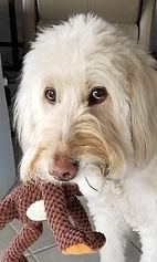 Divot with doggie.jpg