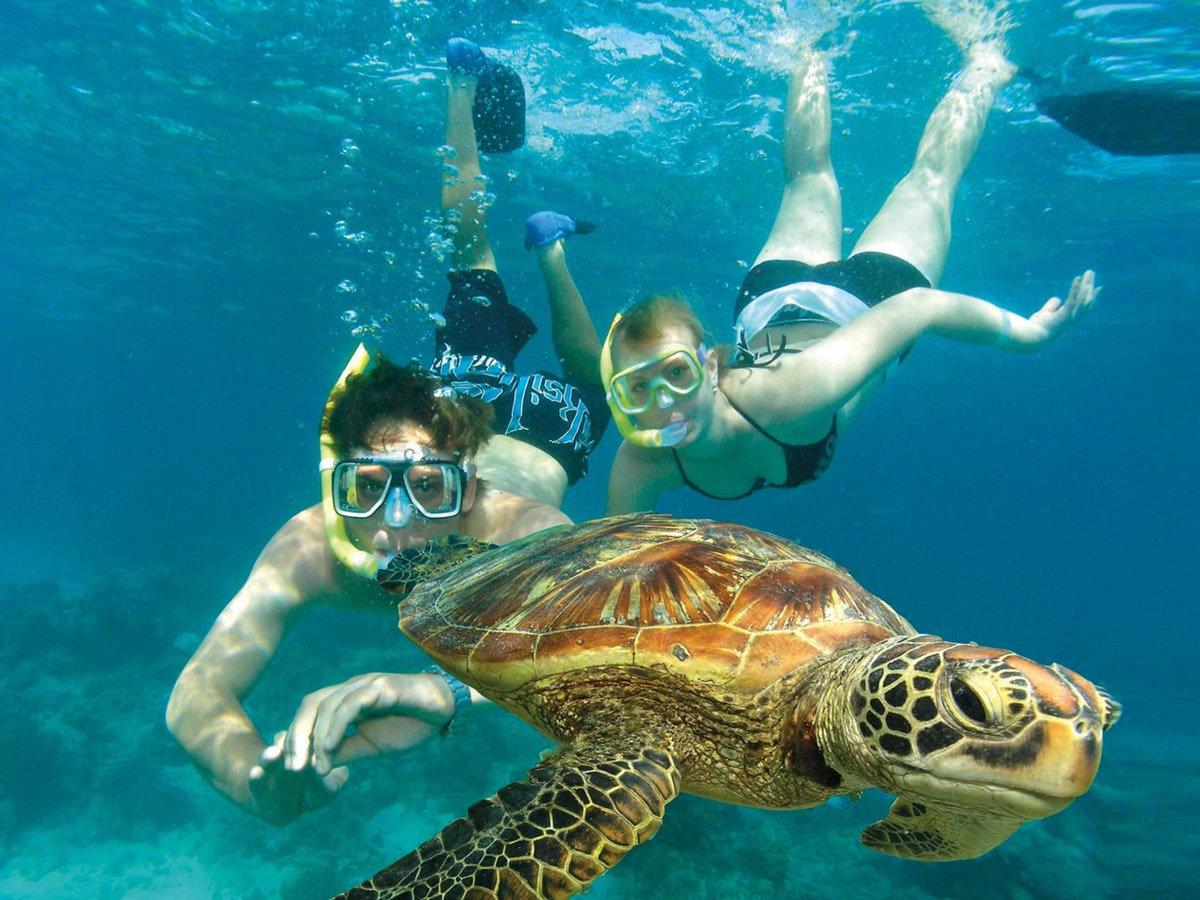 Sea-turtle Snorkel