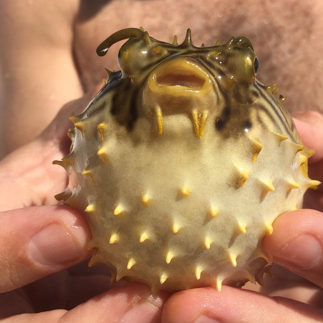 Creature Feature Kayaking