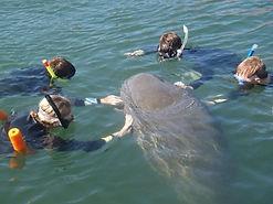 Manatee & snorkelers.jpg