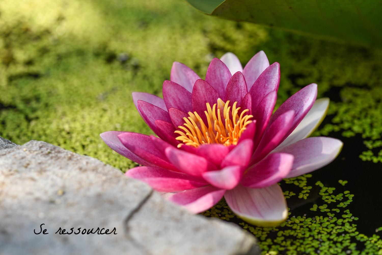 Méditation, pleine conscience