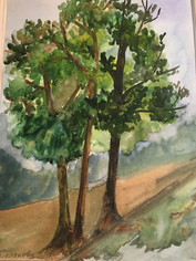 деревья 2.JPG
