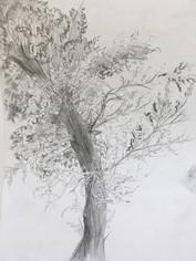 деревья 1.JPG