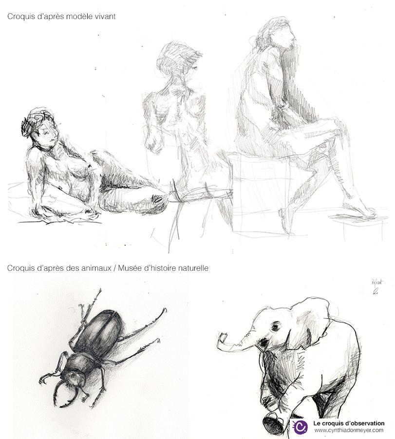 Exemples de croquis - Animaux et modèle vivant