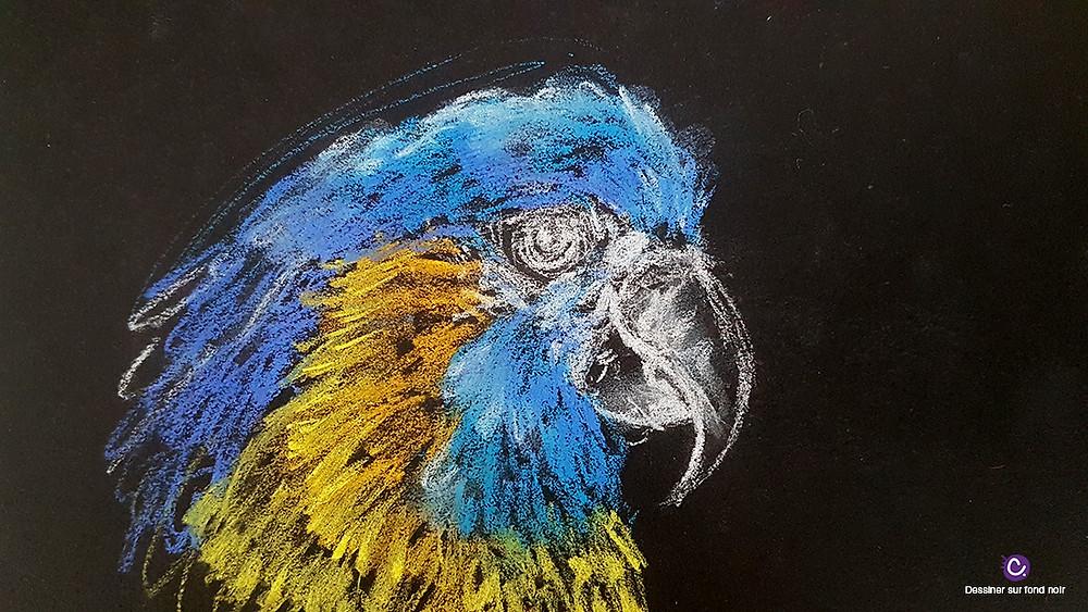 Astuce 3 pour dessiner sur fond noir - Portrait de perroquet bleu et jaune sur fond noir