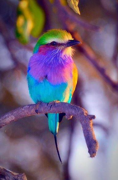 La référence - Photo d'oiseau