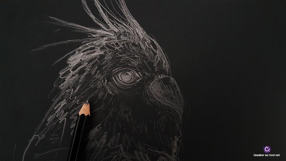 Astuce 7 pour dessiner sur fond noir - Dessin d'un calopsitte au crayon graphite sur fond noir, effet métal
