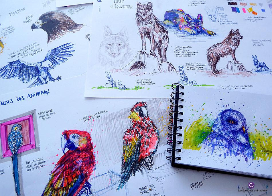 Planches de croquis animaliers - Loups, oiseaux, rapaces