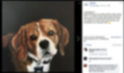 Retratos mascotas por encargo commissioed pet portrait