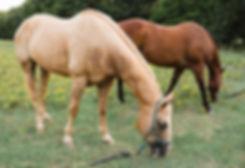horse7_websize_edited.jpg