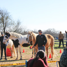 horses lined up.jpg