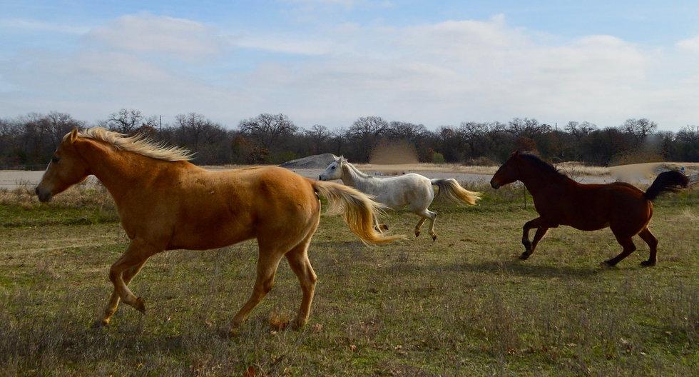Running Horses_edited.jpg