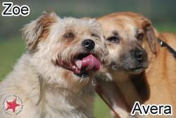 Avera und Zoe