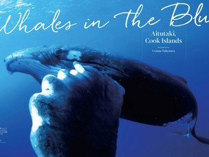 【雑誌掲載】Divers アイツタキ島のザトウクジラの紹介