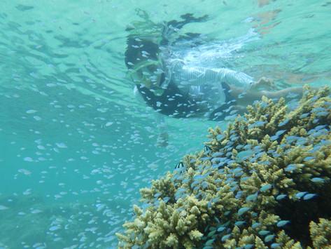 【質問】ラロトンガ島のラグーンになぜたくさんの魚がいるのですか?