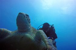 aitutaki diving with onu and turtle