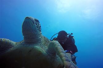 マリンダイビングフェア2017 クック諸島も参加します