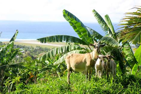 マオリキングがクック諸島に来る!?! マオリの王様の話
