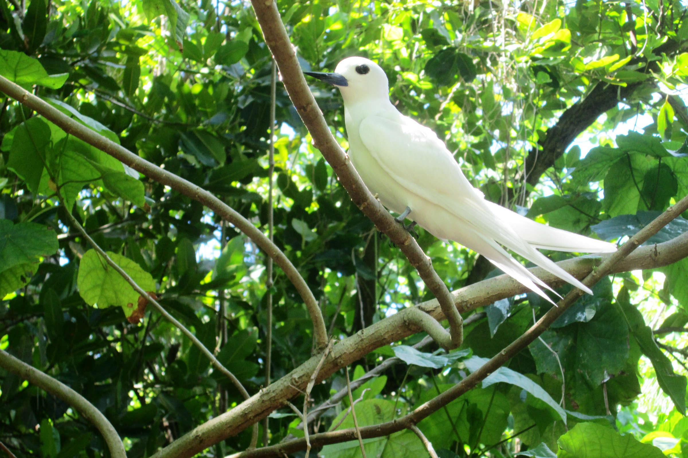 white bird in Akaiami island