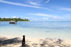 muri beach white birds and a dog