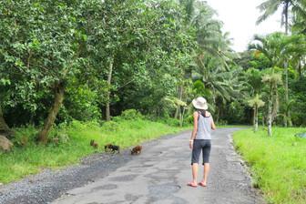 島のバックロードお散歩風景 今日は子豚と遭遇