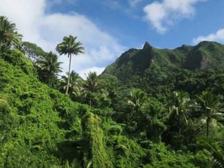 幻のキングバナナを求めて山へ