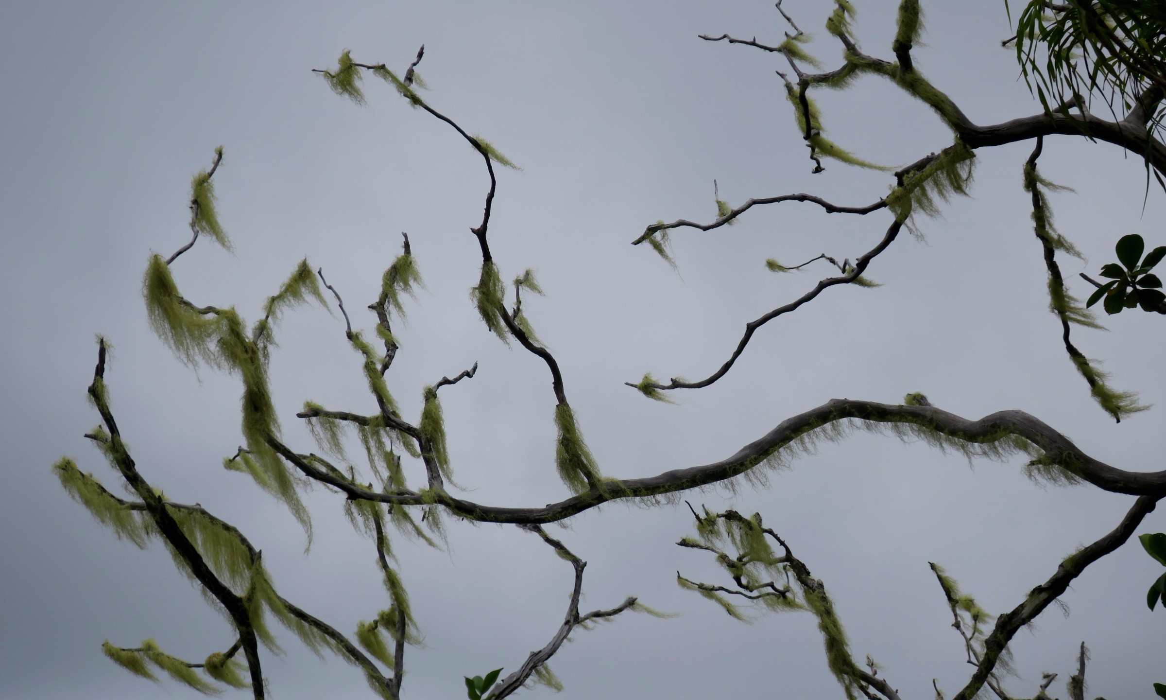 cross island trek moss on tree