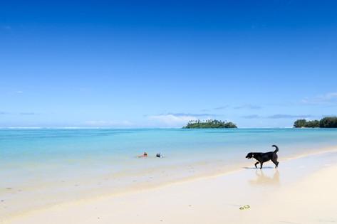 世界海洋デー 大規模なビーチクリーニング開催