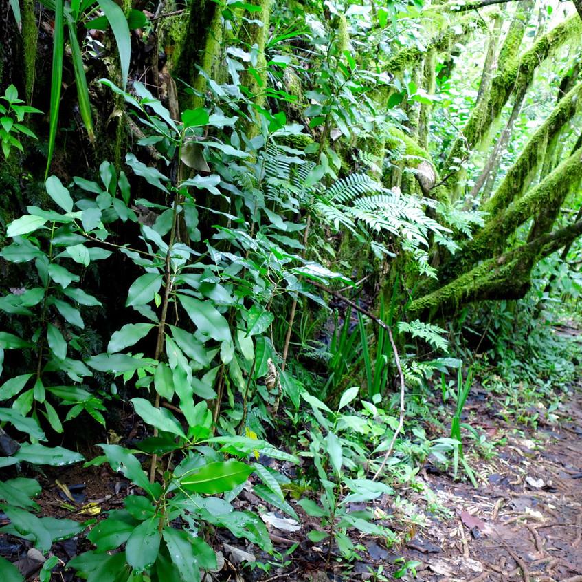 cross island trek south side path 8