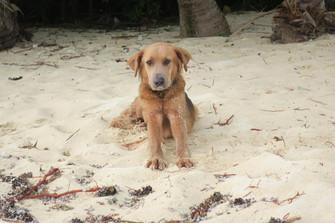 年明けに迷子の犬が増えた事件 その原因は?