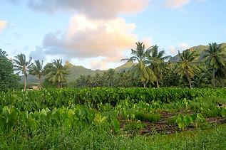 クック諸島ラロトンガ島