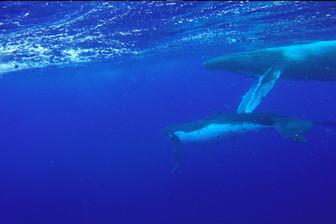 99.99%海の国家ができること。世界最大の海洋保護区設立「マラエモアナ」