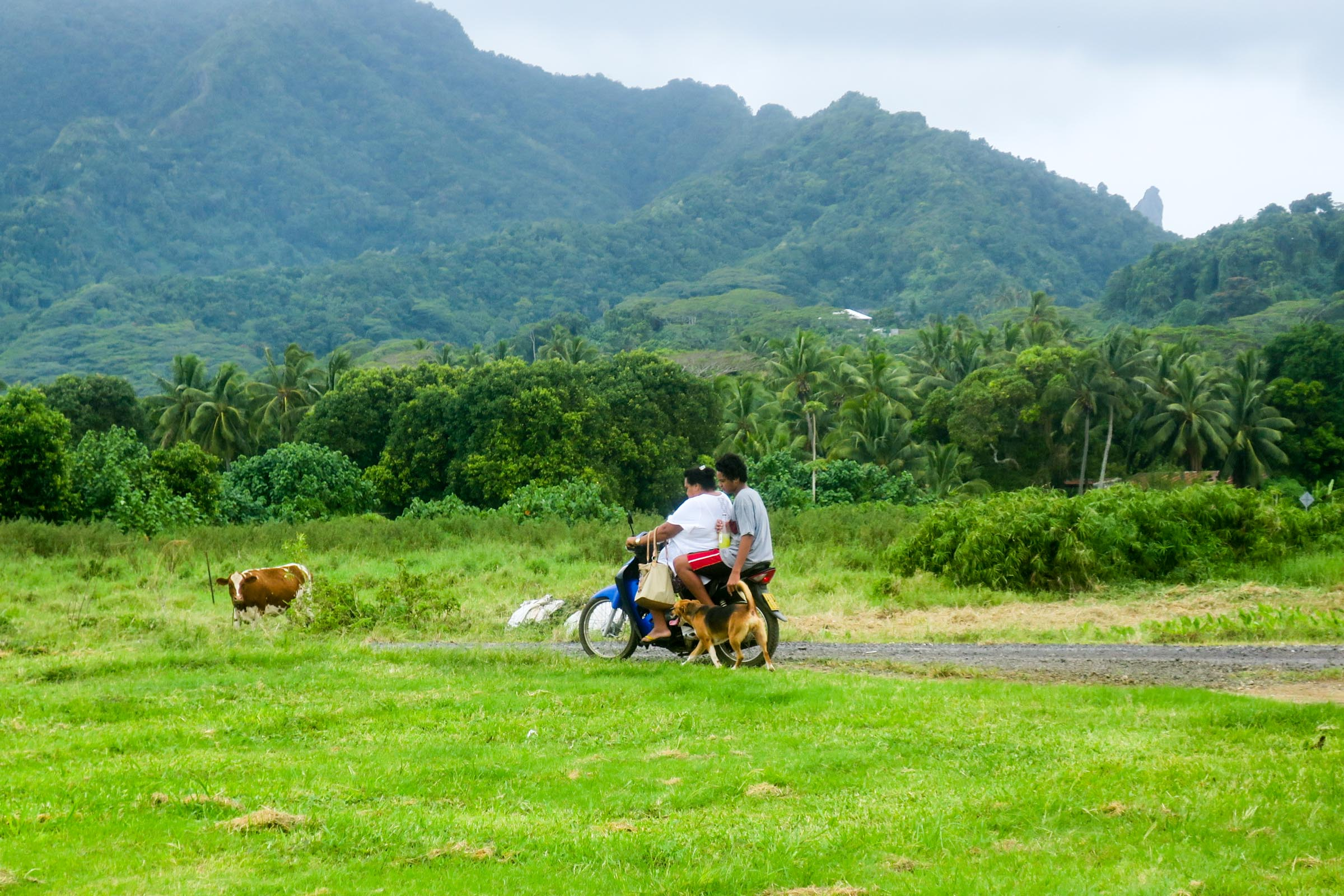 bike-cow-dog