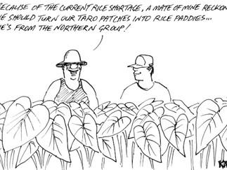 島にお米がなくなり3週間... タロ芋畑を水田にしたら?