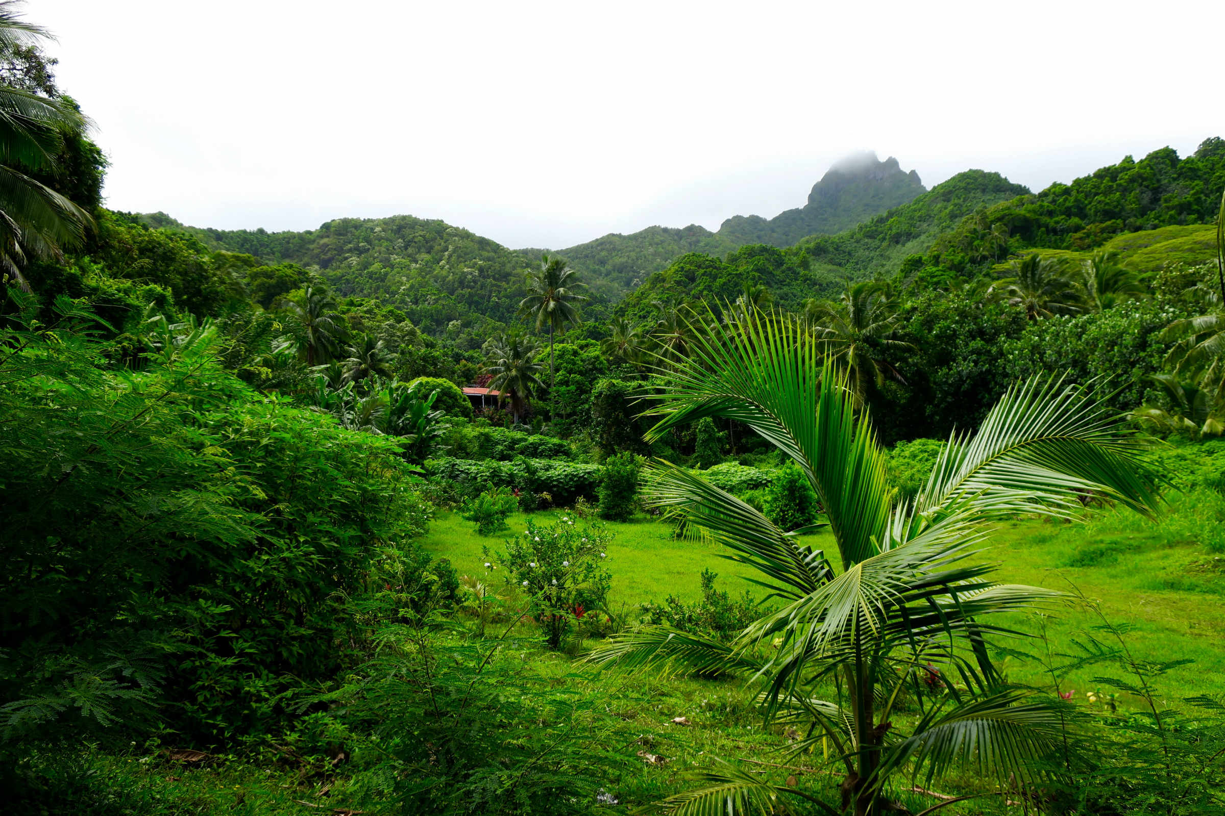 Tupapa back road Jan