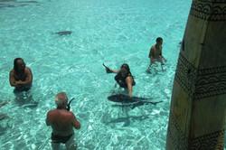 swim with fish in aitutaki