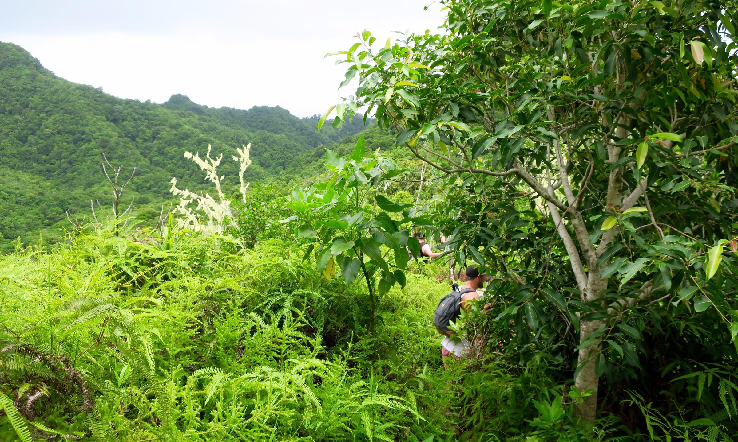 cross island trek south side path 2